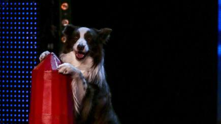 Can anyone stop this dog on Britain's Got Talent?