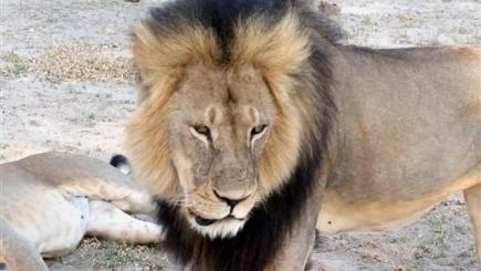 Protected lion Cecil was killed in Hwange National Park in Zimbabwe (AP)