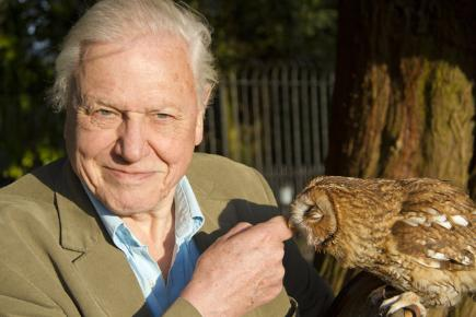 David Attenborough poses with an owl for new series David Attenborough's Natural Curiosities