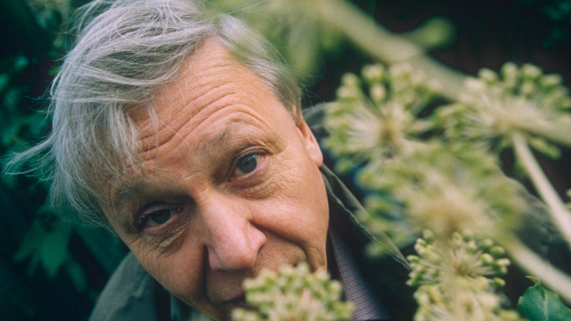 Sir David Attenborough's best moments: Life on Earth, Blue